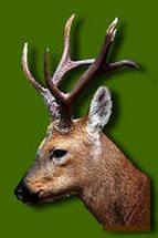 Охота курганская область